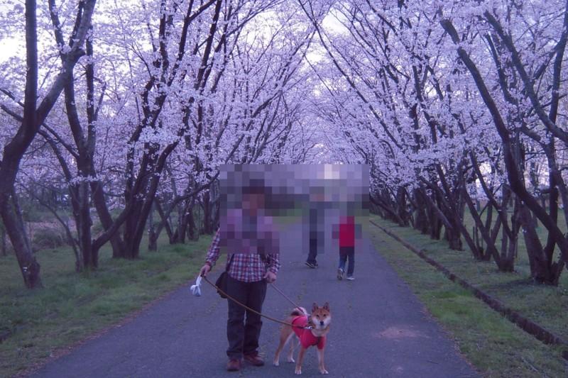 f:id:miyuki04:20100403234801j:image:w400