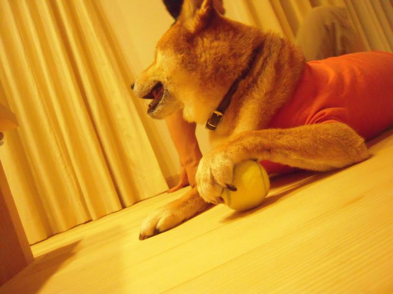 f:id:miyuki04:20110818232237j:image:w400