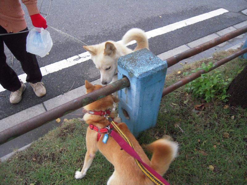 f:id:miyuki1967:20101029070230j:image:w400