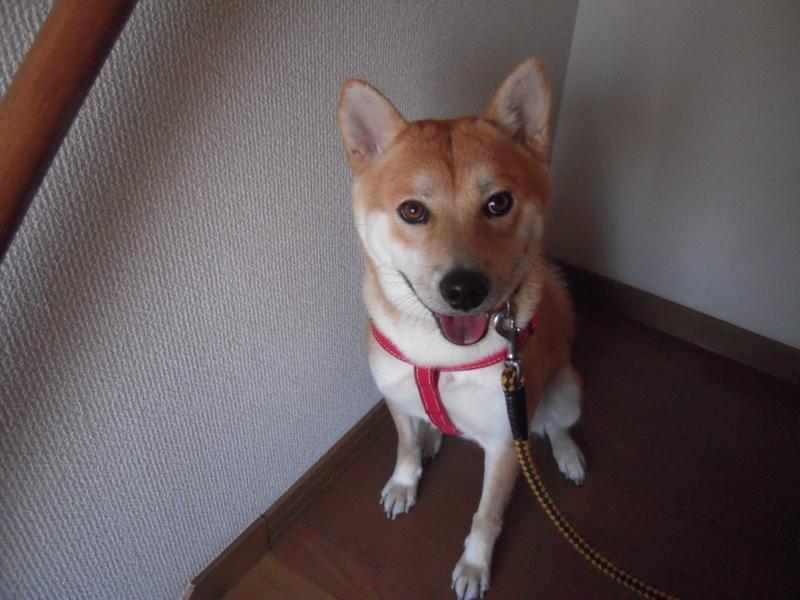 f:id:miyuki1967:20101106082255j:image:w400