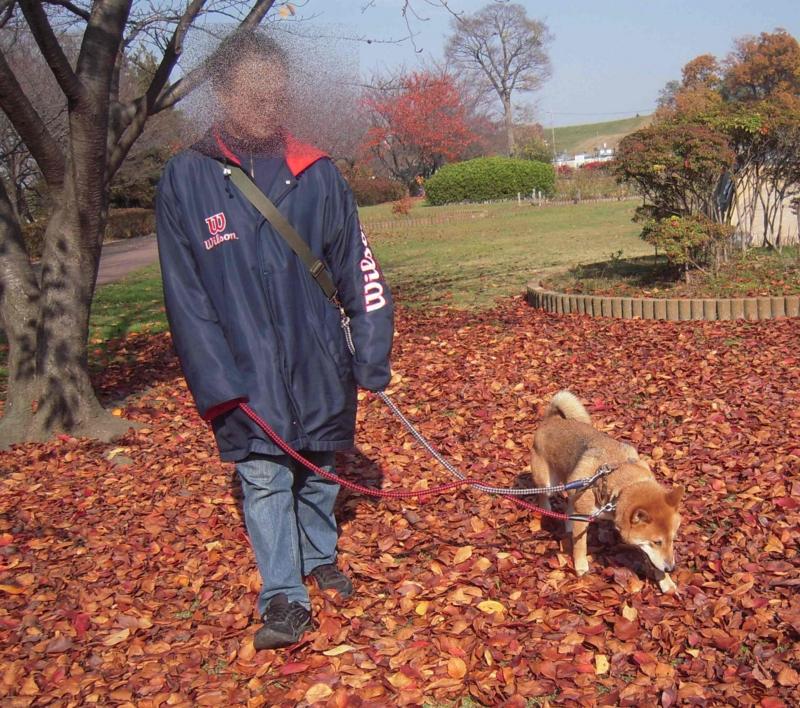 f:id:miyuki1967:20101129155153j:image:w400