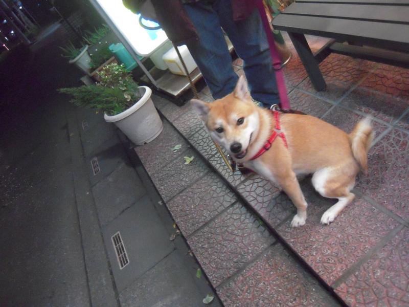 f:id:miyuki1967:20101204184905j:image
