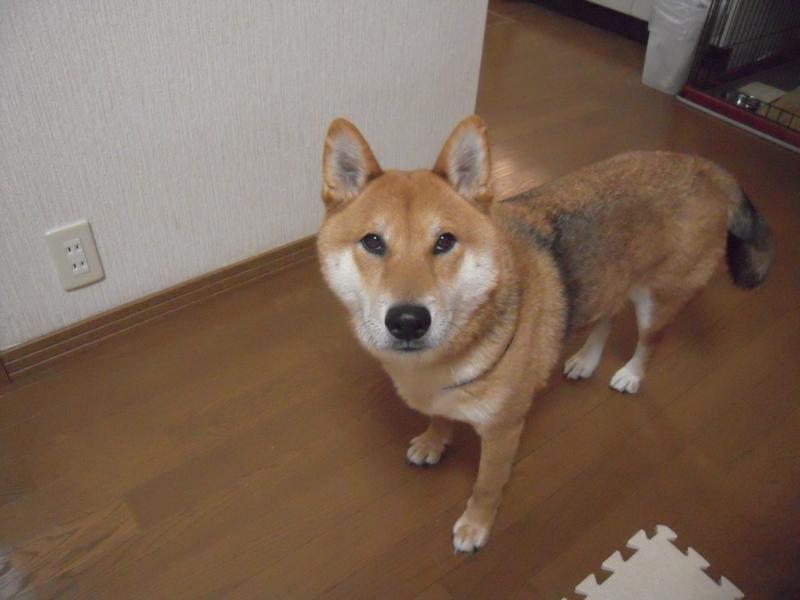 f:id:miyuki1967:20101215075943j:image:w400