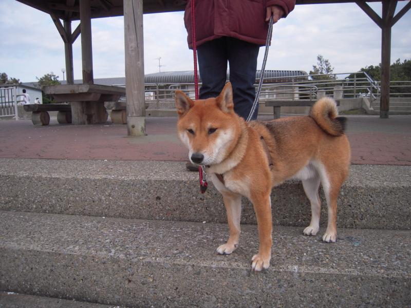 f:id:miyuki1967:20101219102340j:image:w400
