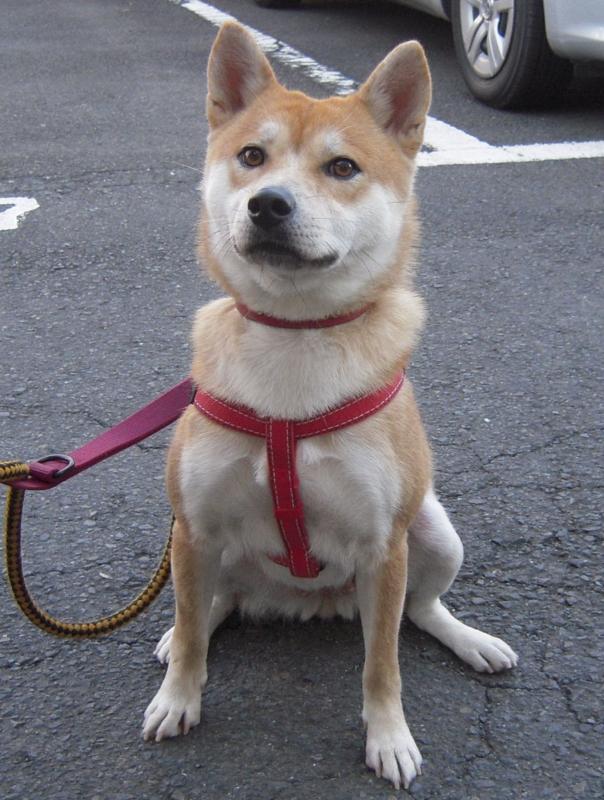 f:id:miyuki1967:20101219195220j:image:w400
