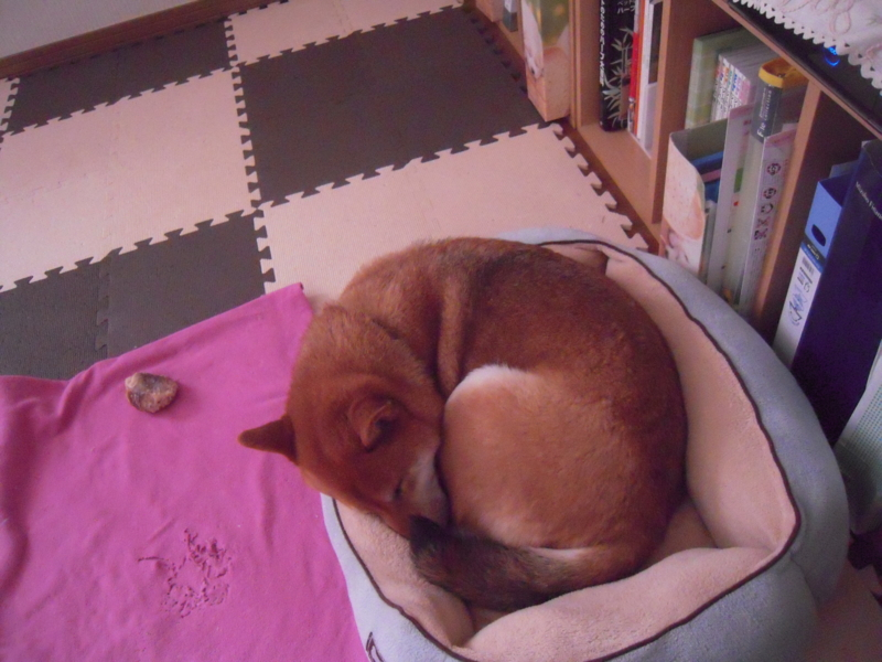 f:id:miyuki1967:20110104134326j:image:w400