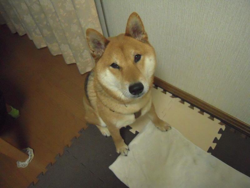 f:id:miyuki1967:20110203201311j:image:w400