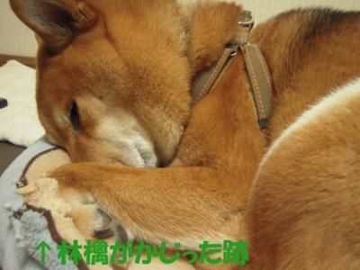 f:id:miyuki1967:20110210112514j:image