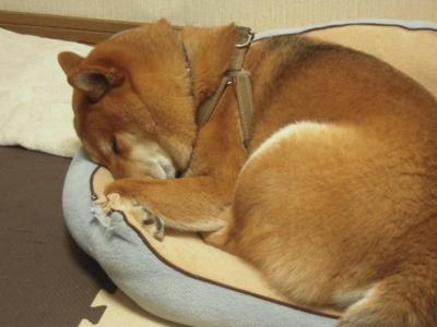 f:id:miyuki1967:20110210112555j:image