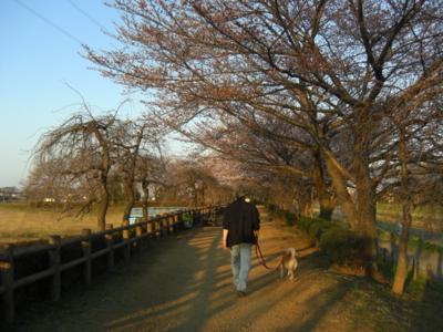 f:id:miyuki1967:20110405173159j:image
