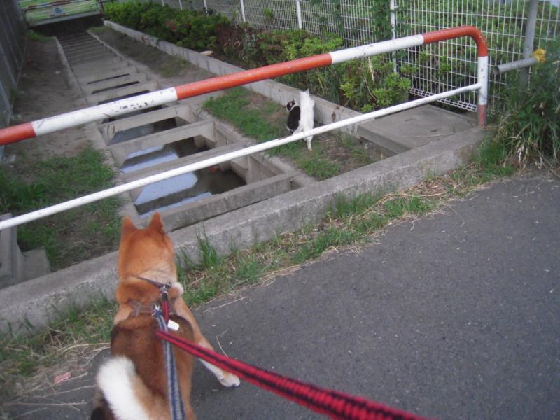 f:id:miyuki1967:20110615191137j:image:w400