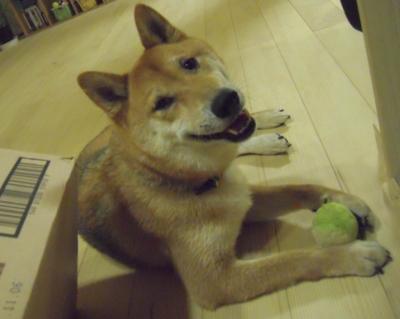 f:id:miyuki1967:20110715105454j:image