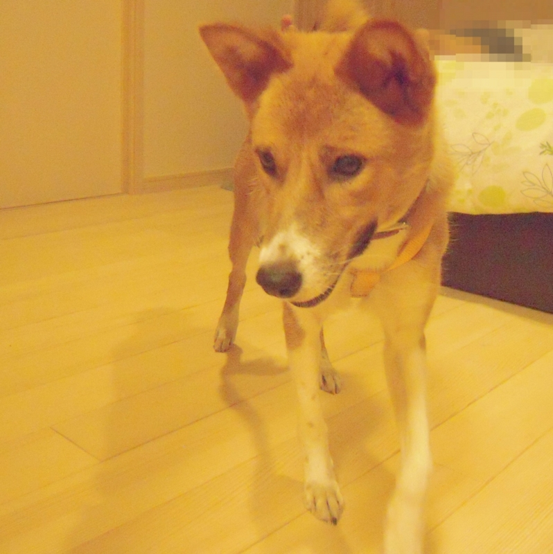 f:id:miyuki1967:20110721112945j:image:w400