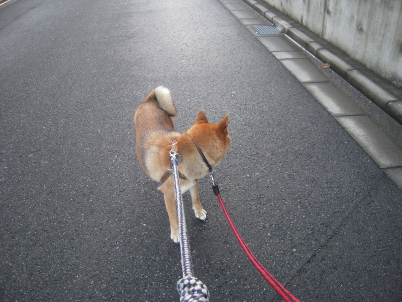 f:id:miyuki1967:20110804182836j:image:w400