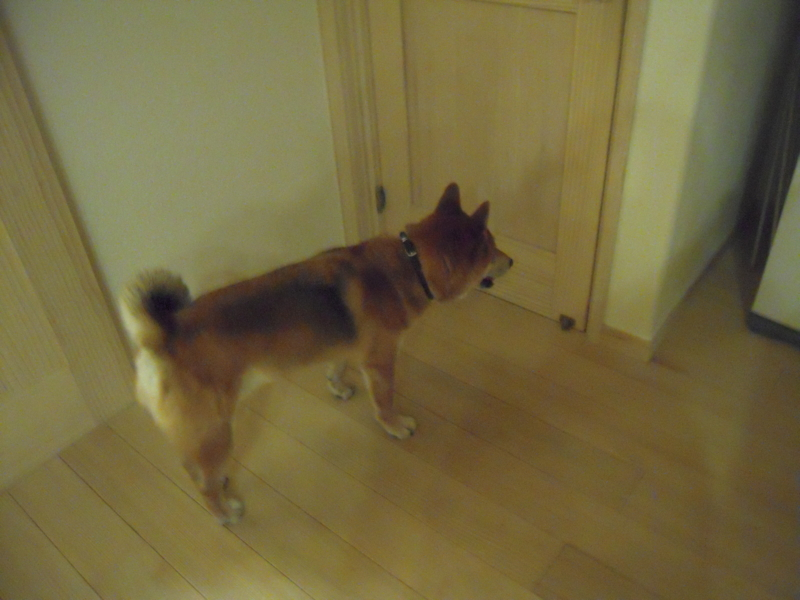 f:id:miyuki1967:20111004231151j:image:w400