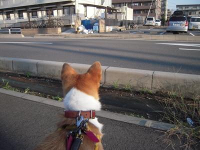 f:id:miyuki1967:20111007072539j:image
