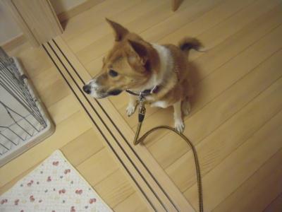 f:id:miyuki1967:20111007073347j:image