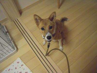 f:id:miyuki1967:20111007073352j:image