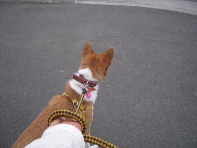 f:id:miyuki1967:20111019072143j:image