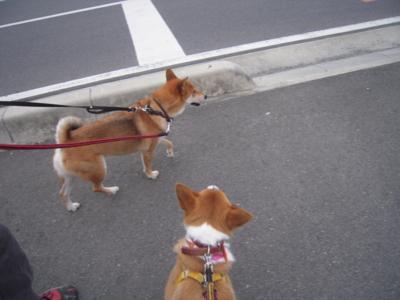 f:id:miyuki1967:20111019072304j:image