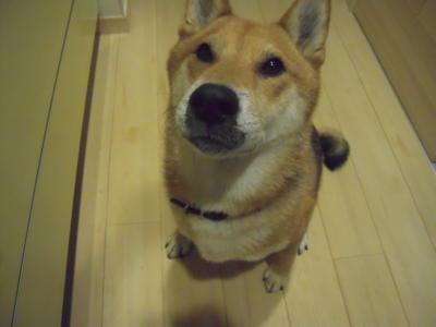 f:id:miyuki1967:20111019180510j:image