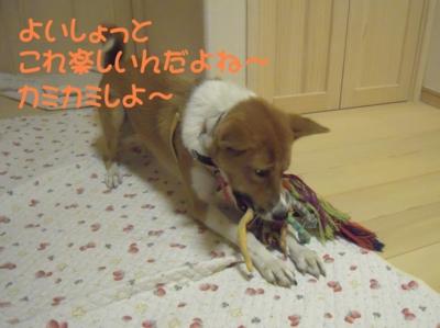 f:id:miyuki1967:20111112095540j:image