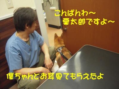 f:id:miyuki1967:20111114102625j:image