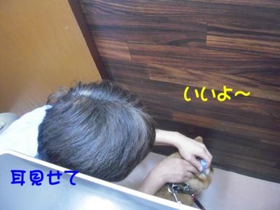 f:id:miyuki1967:20111114102635j:image