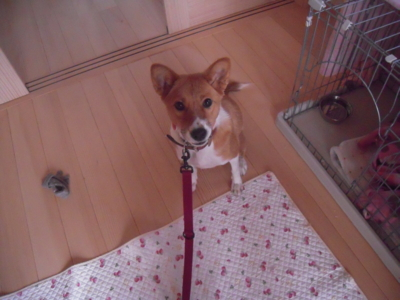 f:id:miyuki1967:20111206081914j:image