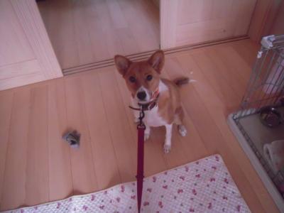 f:id:miyuki1967:20111206081936j:image