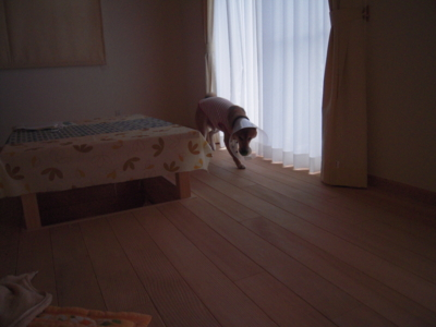 f:id:miyuki1967:20111206083934j:image