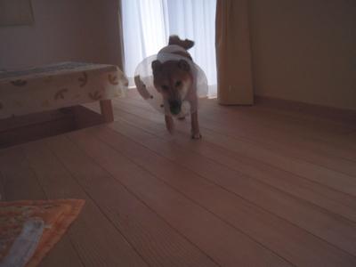 f:id:miyuki1967:20111206112020j:image