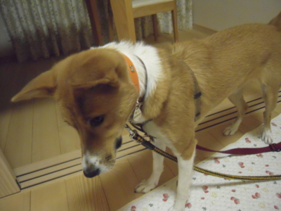 f:id:miyuki1967:20111213070527j:image