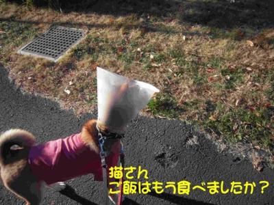 f:id:miyuki1967:20111219093711j:image