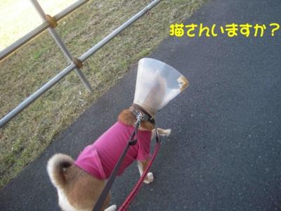 f:id:miyuki1967:20111219093731j:image