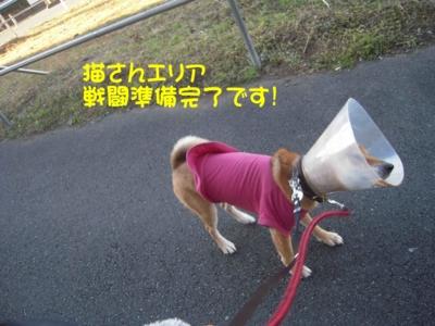 f:id:miyuki1967:20111219093740j:image