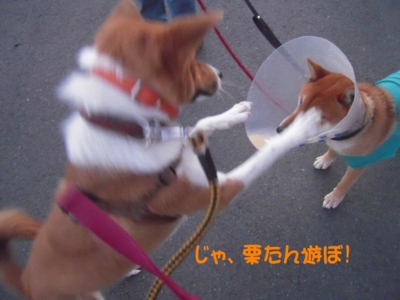 f:id:miyuki1967:20111220111653j:image