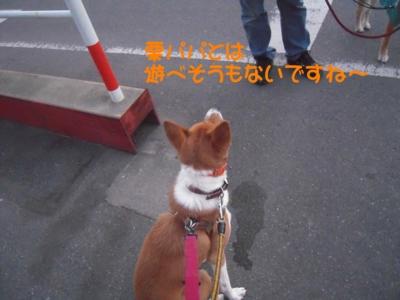 f:id:miyuki1967:20111220111702j:image