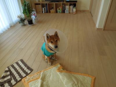 f:id:miyuki1967:20111223152135j:image