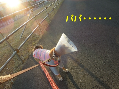f:id:miyuki1967:20120107221838j:image