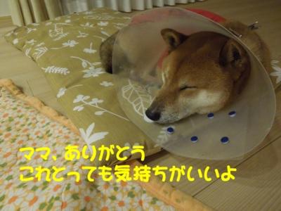 f:id:miyuki1967:20120108161432j:image