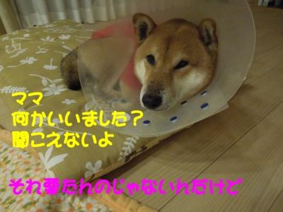 f:id:miyuki1967:20120108161451j:image