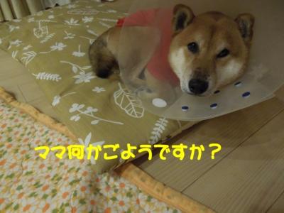 f:id:miyuki1967:20120108161510j:image