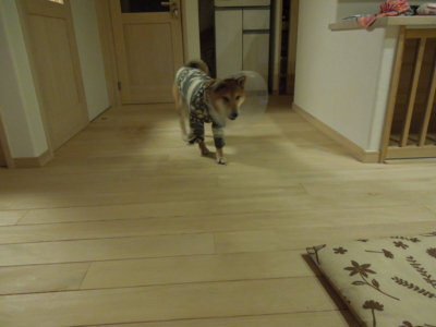f:id:miyuki1967:20120109220835j:image