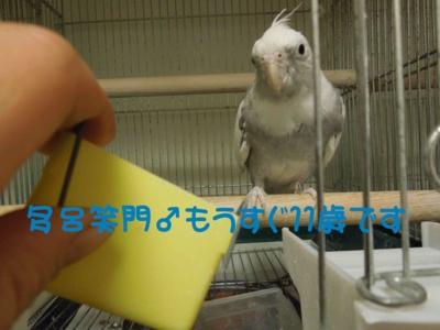 f:id:miyuki1967:20120111092153j:image