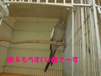 f:id:miyuki1967:20120111092228j:image