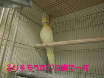 f:id:miyuki1967:20120111092245j:image