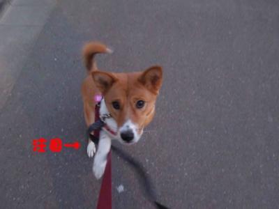 f:id:miyuki1967:20120112094111j:image