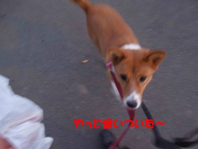 f:id:miyuki1967:20120112094146j:image