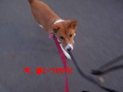 f:id:miyuki1967:20120112094223j:image